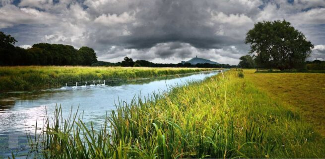 Summer-swans-south-drain-glastonbury-tor-somerset