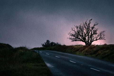 Crow-in-winter-tree-along-exmoor-road-on-location-photographer